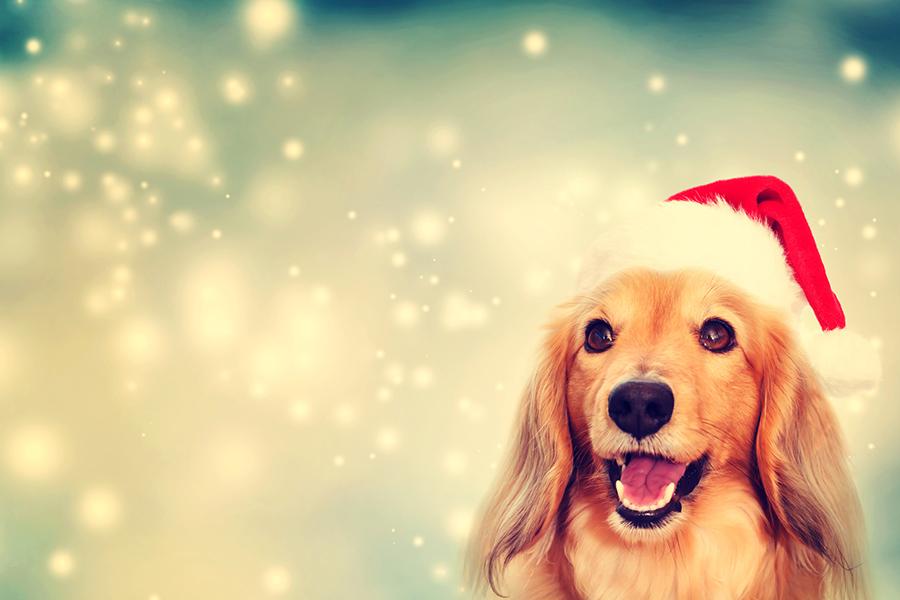 Santa Paws Pet Photos Every Thursday