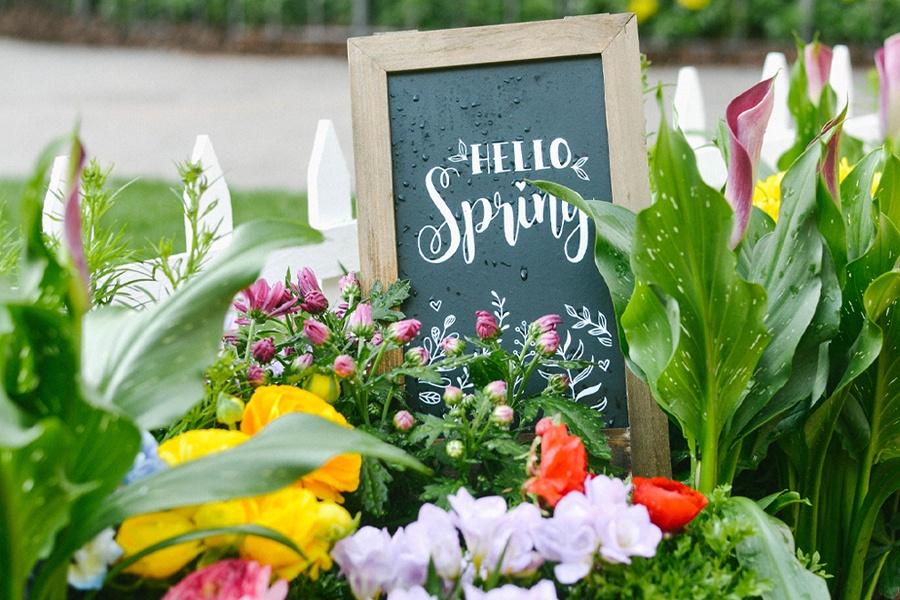 Springtime Photo Op